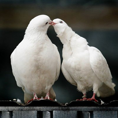 Ангелы о романтической любви дорин