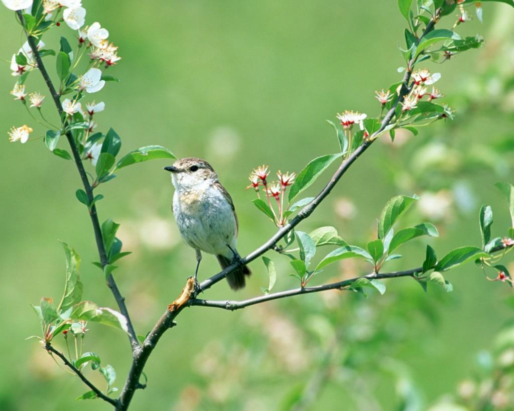 http://meditation-portal.com/wp-content/uploads/2013/03/Nature_Seasons_Spring__006102_-1024x819.jpg