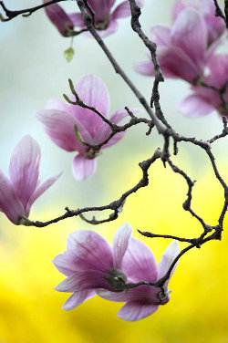 http://meditation-portal.com/wp-content/uploads/2013/03/foto.jpg