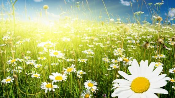 http://meditation-portal.com/wp-content/uploads/2013/06/16-05-12-2-13-e1370255282879.jpg