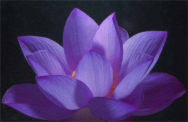 http://meditation-portal.com/wp-content/uploads/2013/07/w9MLSpNVpwk.jpg