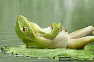 http://meditation-portal.com/wp-content/uploads/2013/10/100624811_lyagushka-300x200.jpg