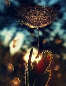 http://meditation-portal.com/wp-content/uploads/2013/11/PGqhwZkoOgw-230x300.jpg