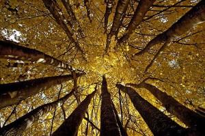 http://meditation-portal.com/wp-content/uploads/2013/11/nov-300x199.jpg