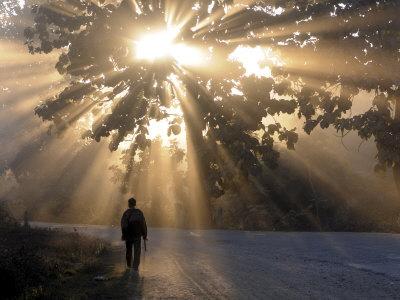 Наука и жизнь Свет внутри нас