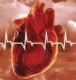 что такое человеческое сердце?