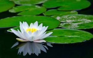 http://meditation-portal.com/wp-content/uploads/2014/09/1113-300x187.jpg