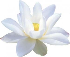 http://meditation-portal.com/wp-content/uploads/2014/09/lotos1-300x246.jpg