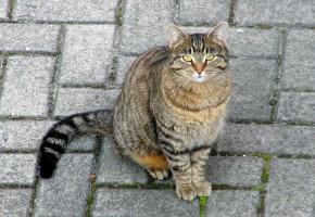 Откуда появились кошки и как влияют на человека