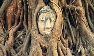https://meditation-portal.com/wp-content/uploads/2015/11/budda-s-derevom-300x180.jpg