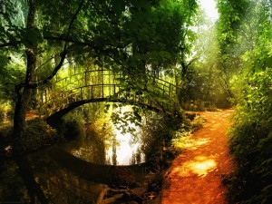 Nature___Forest_Bridge_over_Forest_River_025783_22